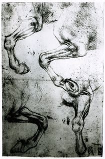 Studies of Horses legs by Leonardo Da Vinci