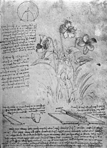 Studies of Violas , fol. 14r from Manuscript B by Leonardo Da Vinci