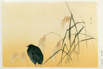 Blackbird, Edo Period by Japanese School