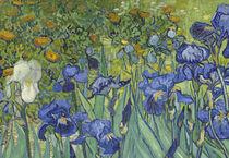 Irises, 1889 von Vincent Van Gogh