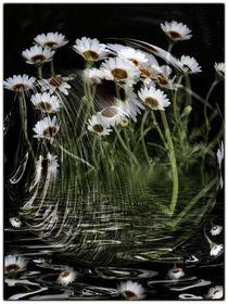 sparkling - weiße Kapmargeriten im Wind by Chris Berger