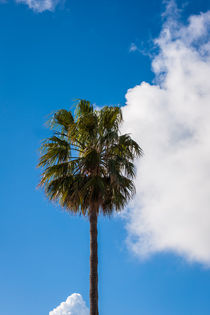Palm and a sky by vasa-photography