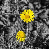 Life is short von vasa-photography