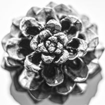 Fir cone from above by vasa-photography