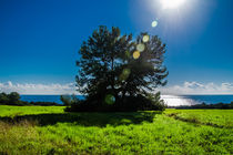 Tree and the sun by vasa-photography