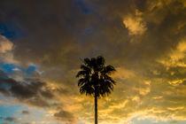 Palm under sunset sky von vasa-photography