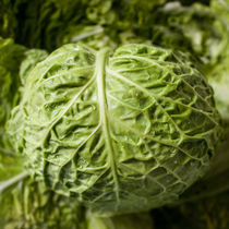 Cabbage by vasa-photography