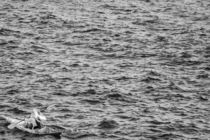 Alone Canoe von vasa-photography