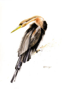 African Darter by Andre Olwage