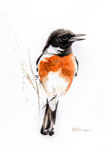 African Stonechat male by Andre Olwage