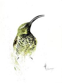 Amethyst Sunbird female by Andre Olwage