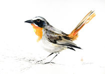 Cape Robin von Andre Olwage