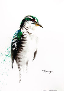 Diderick Cuckoo von Andre Olwage