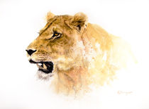 Lioness 1 by Andre Olwage