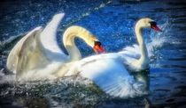 Dreamy Swan love von kattobello