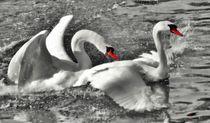 Swan Love von kattobello
