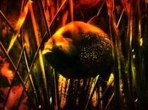 Fantastischer Piranha 2 von kattobello