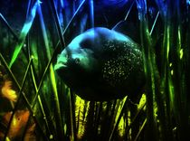 Fantastischer Piranha 1 von kattobello