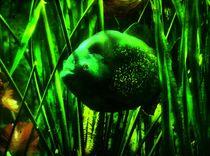 Piranha in grün von kattobello