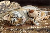 Gute Nacht kleiner Tiger von Katerina Mirus
