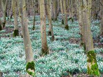 Frühlingserwachen am Niederrhein von Frank  Kimpfel