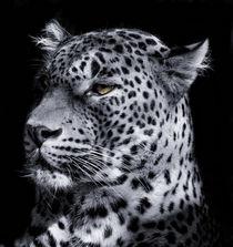 Leopard Portrait von Katerina Mirus