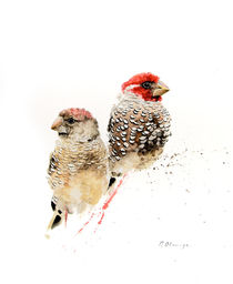 Red Headed Finches von Andre Olwage