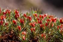 Blüten im Moos by Ronald Nickel