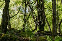 Naturnaher Wald als Wildnisgebiet by Ronald Nickel