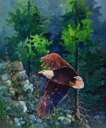 American bald eagle von Geoff Amos