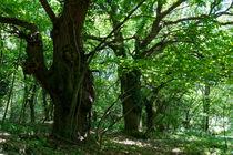 Im Schatten alter Bäume by Ronald Nickel