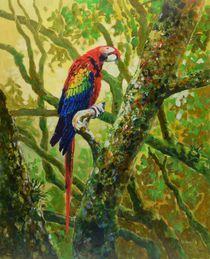 Scarlet Macaw von Geoff Amos