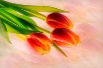 Tulpencomposing von Andreas Hoops