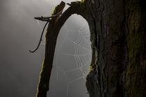 Nebel und Spinnweben im Wald von Ronald Nickel