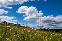 Blumenwiese im Sommer von Ronald Nickel