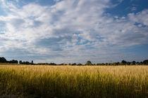 Getreidefeld im Sommer von Ronald Nickel