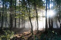 Morgennebel im herbstlichen Wald von Ronald Nickel