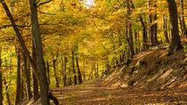 Bei Sonnenschein durch den goldenen Herbst von Ronald Nickel