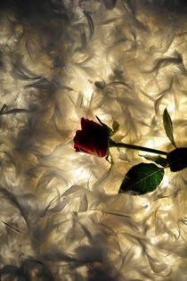 Das Rosenbett by Claudia Evans