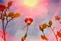 Magnolien von Claudia Evans