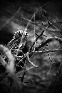 Baby Owl by Arianna Biasini