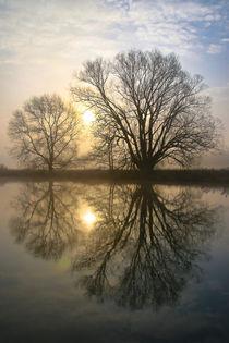 Bäume am Wasser von Bernhard Kaiser
