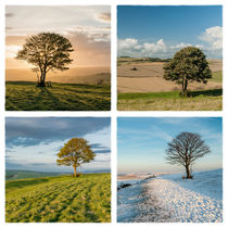 The Nowhere Tree - Four Seasons by Malc McHugh