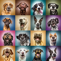 Funny Dog Faces von Manuela Kulpa