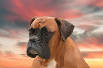 Cute Boxer Dog Water Color Oil Painting Art by Sapan Patel