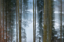 Bright Forest by dagino