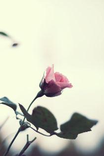 rosé by Mel Margolf
