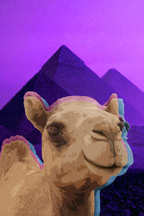 Psychedelic Camel. by Pedro  Barros