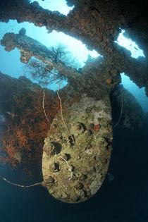 Propeller Britsh Loyalty Wreck von Norbert Probst