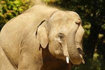Elefant 1 von kattobello